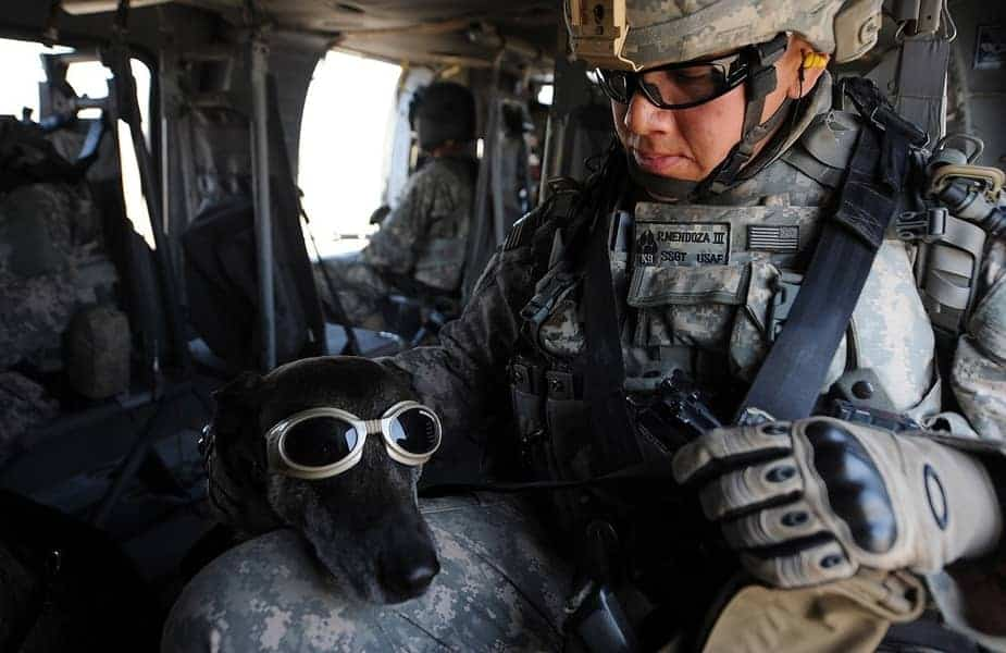 Military Man in Goggles With a Dog Next to Him Also in Goggles