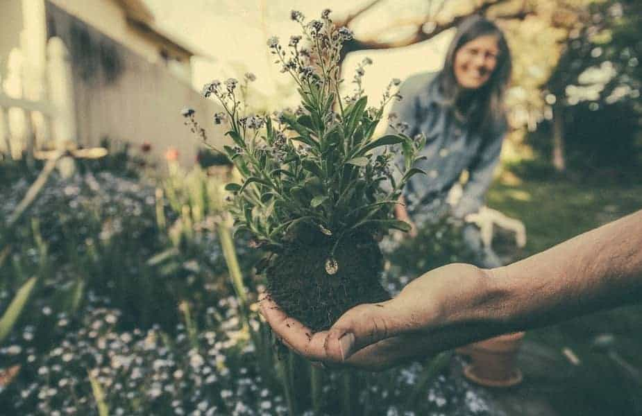 Hand Holding a Plant with Woman Smiling in Background