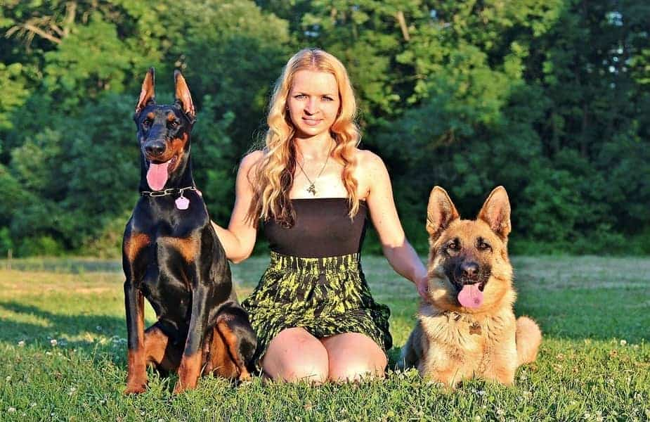 Doberman and German Shepherd With a Woman