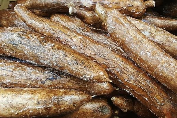 Yuca-Cassava-Tubers