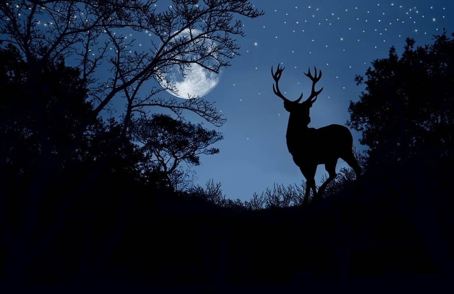 A Deer at Night Standing in Front of the Moon
